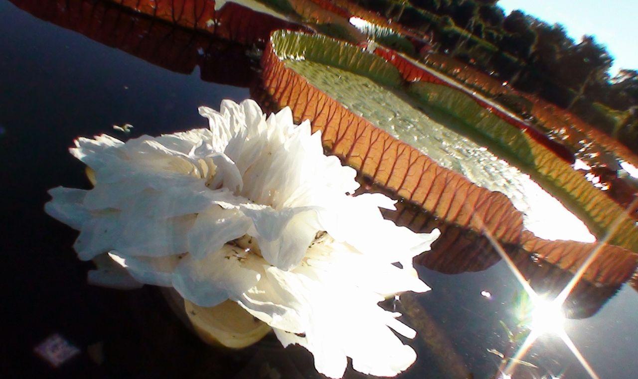 galeria-flora