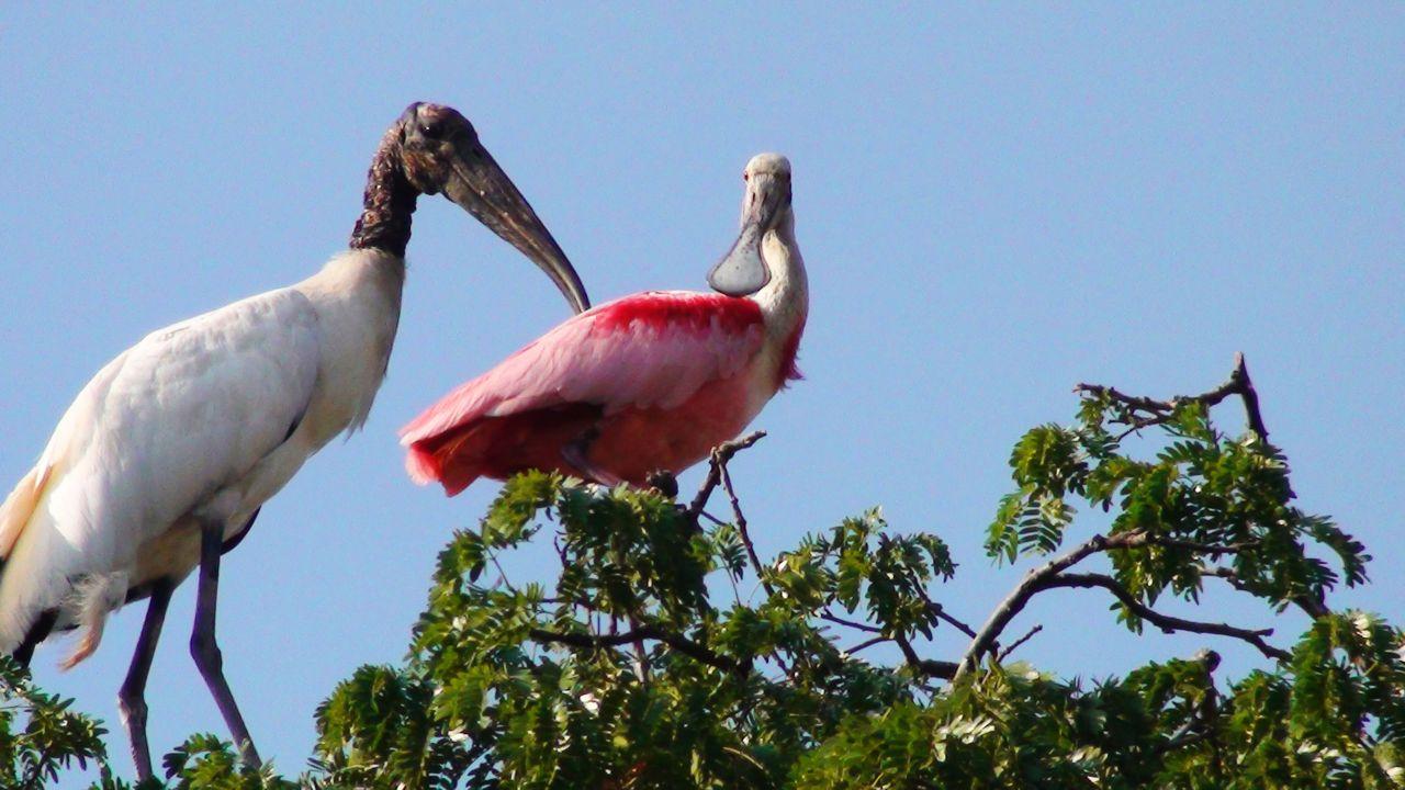 slider-aves-do-pantanal